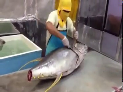 Superfast Tuna Cutting