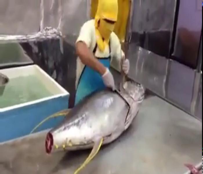 Superfast Tuna Cutting